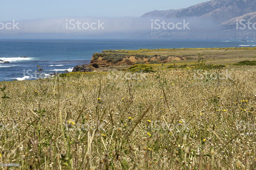 Flowers and Grass by Coast royalty-free stock photo
