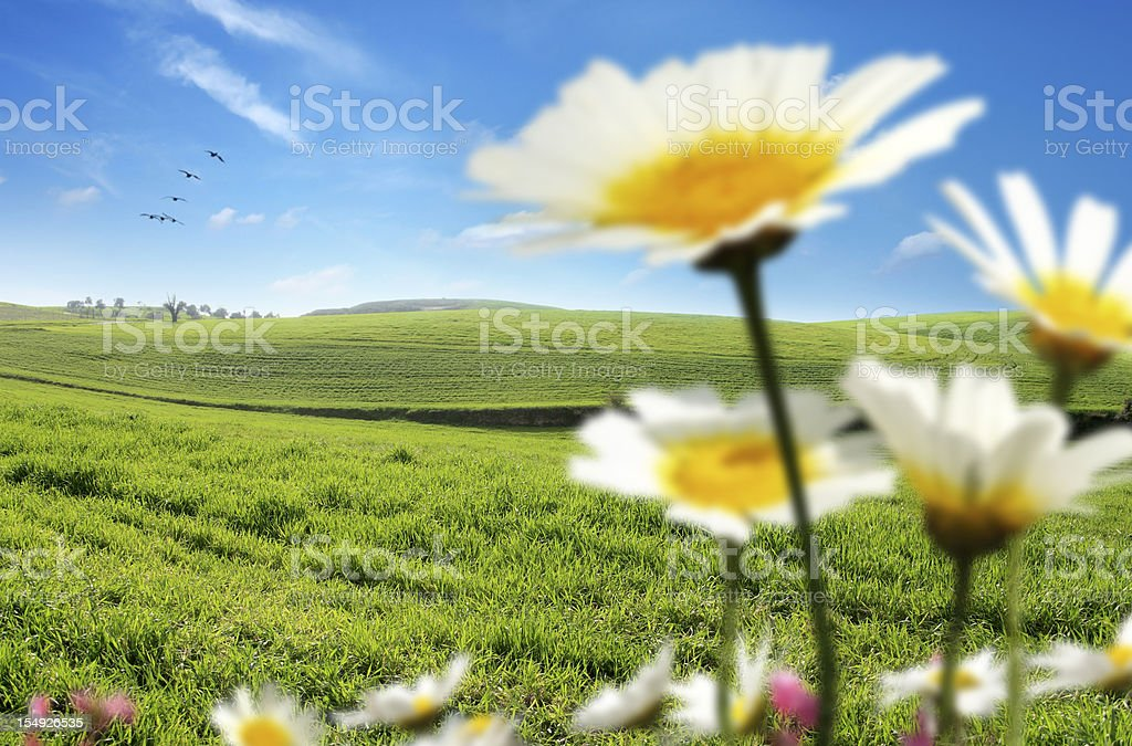flowers and green landscape royalty-free stock photo