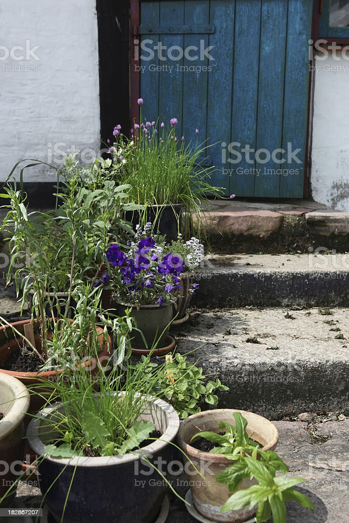 Flowers and herbs in backyard of old farmhouse royalty-free stock photo