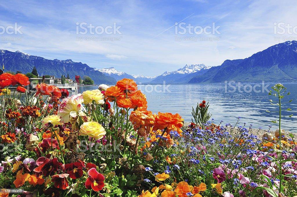 flowers and lake near Vevey stock photo