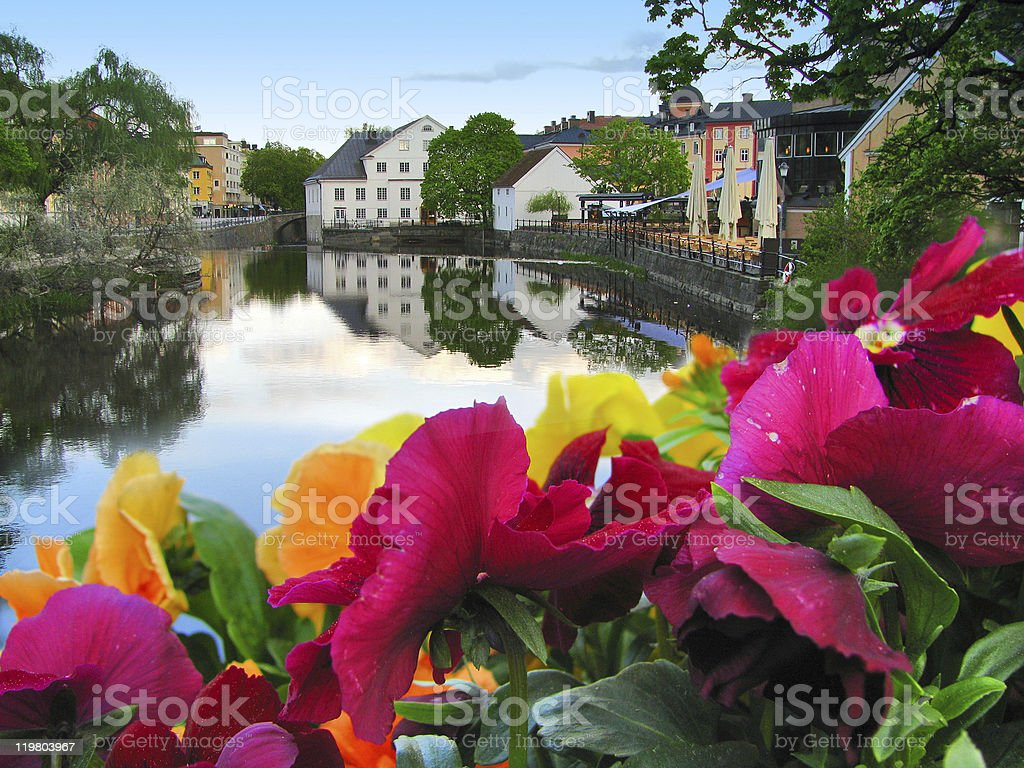 Flowers And Lake stock photo