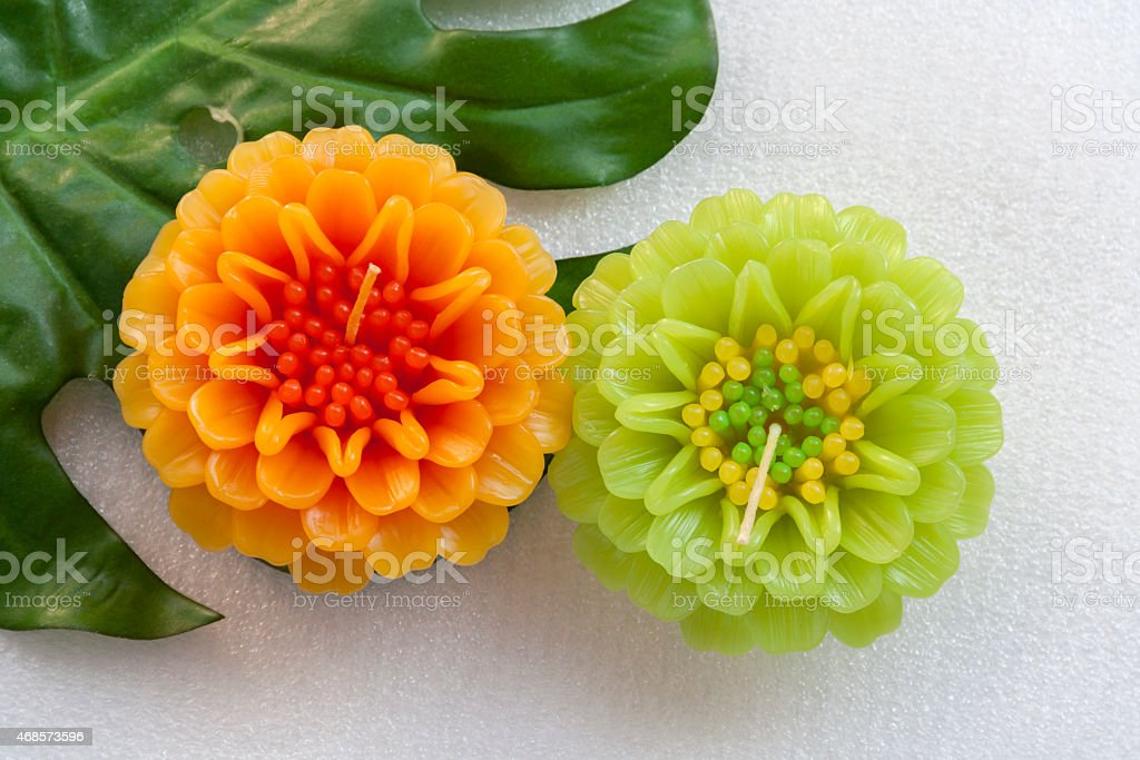 Flowers and leaf set on white background royalty-free stock photo