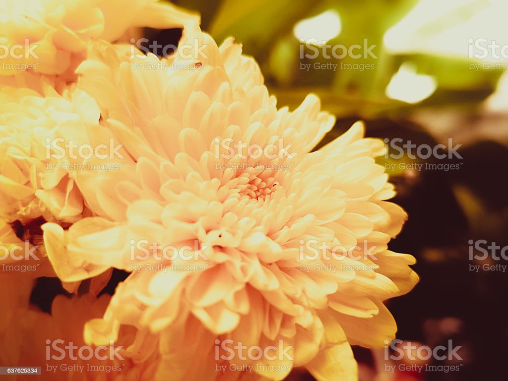 Flowers and leaves in the garden with sunlight. stock photo