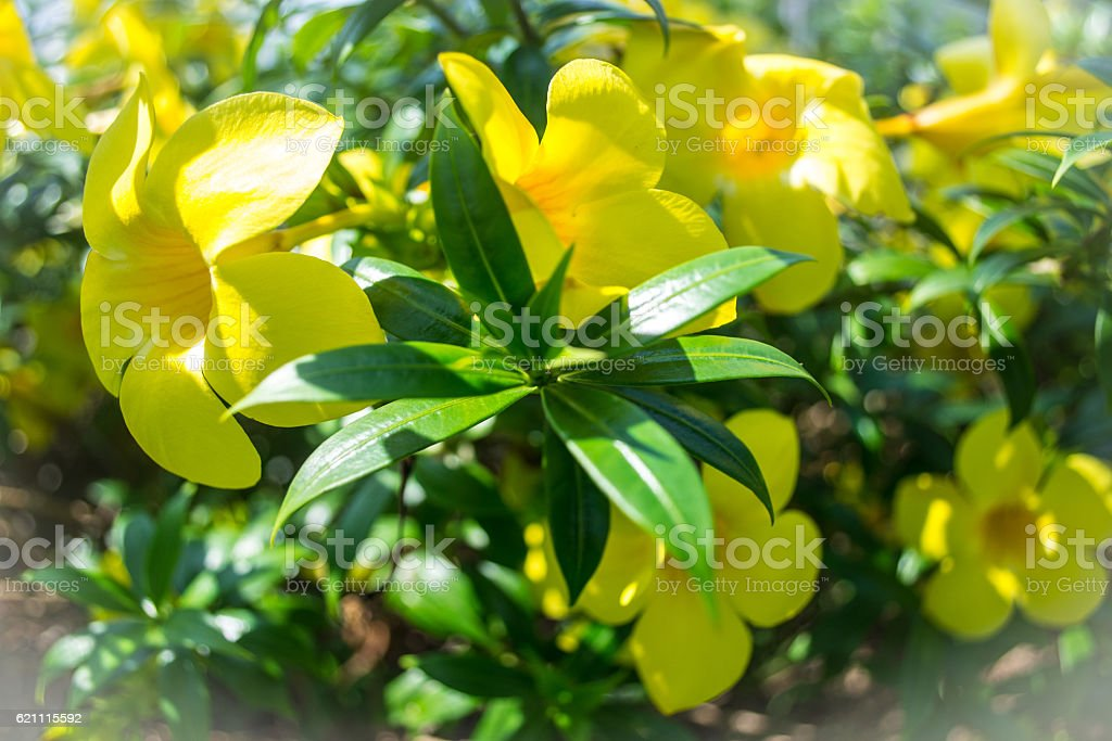 Flowers and leaves royalty-free stock photo