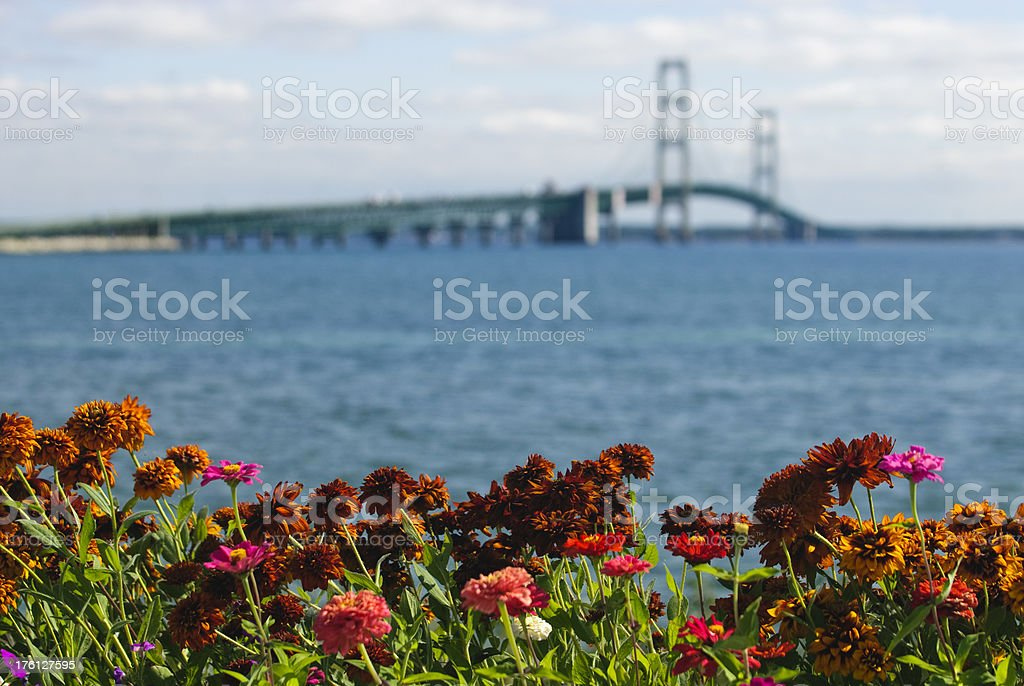 Flowers and Mackinac Bridge stock photo