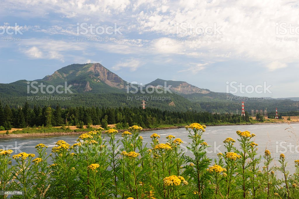 Flowers and Mountains royalty-free stock photo