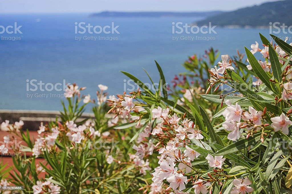 Flowers and ocean royalty-free stock photo