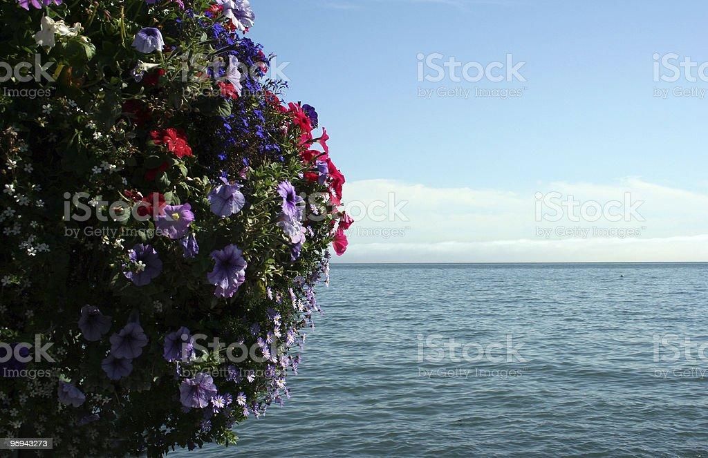 Fleurs et l'océan photo libre de droits