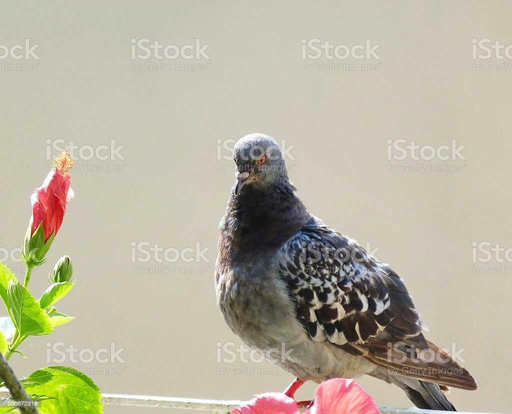 Flowers and pigeon stock photo