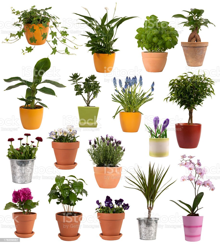 Flowers and plants in pots royalty-free stock photo