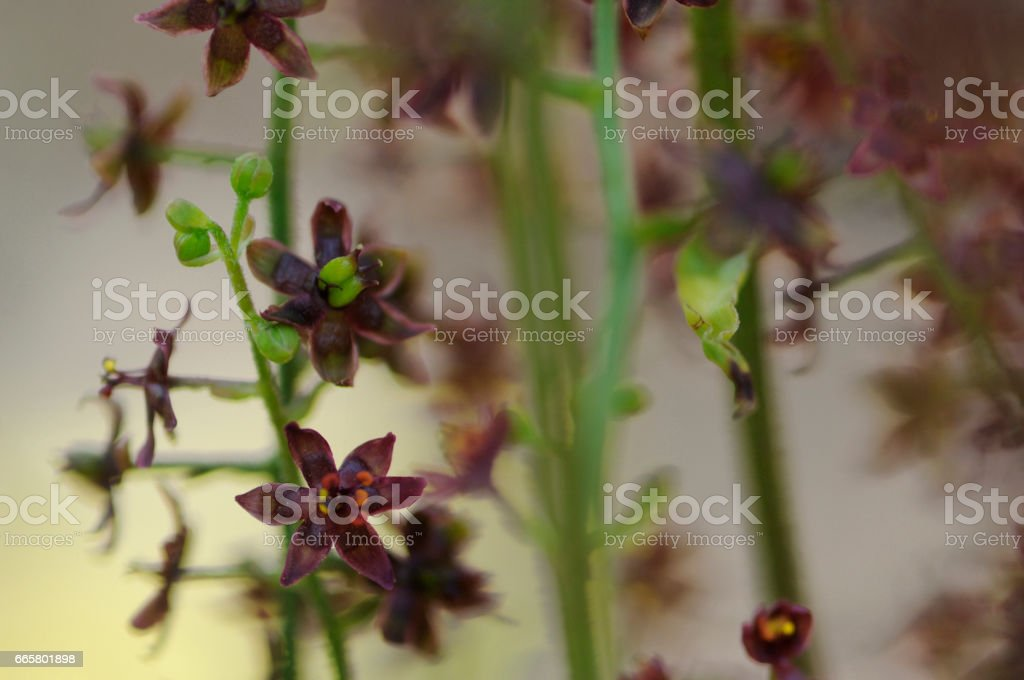 Flowers and plants stock photo