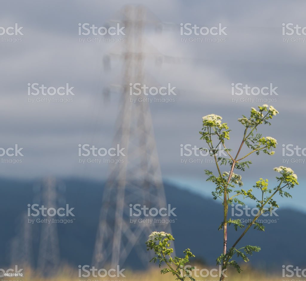 Flowers and Power Lines stock photo