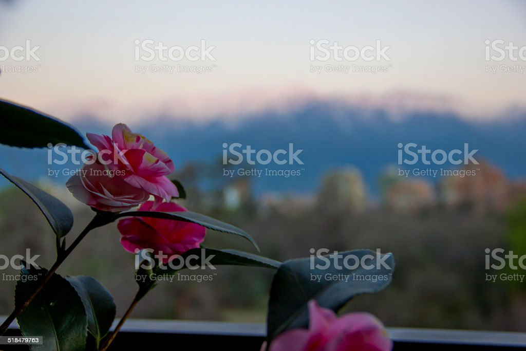 flowers and the montain stock photo