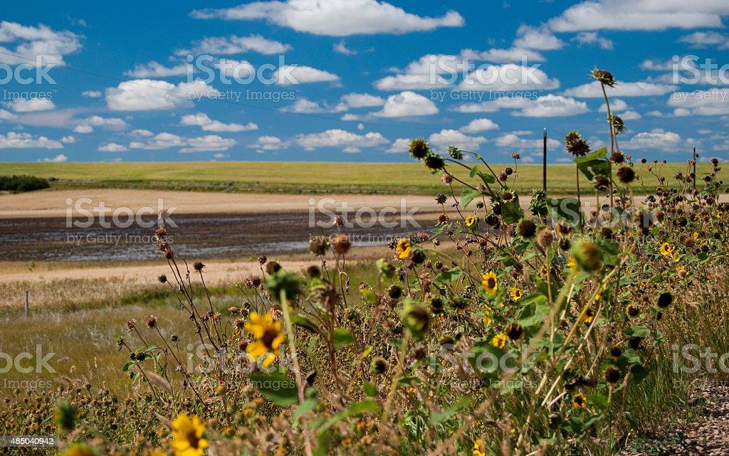 Flowers and the Sky in Saskatchewan stock photo