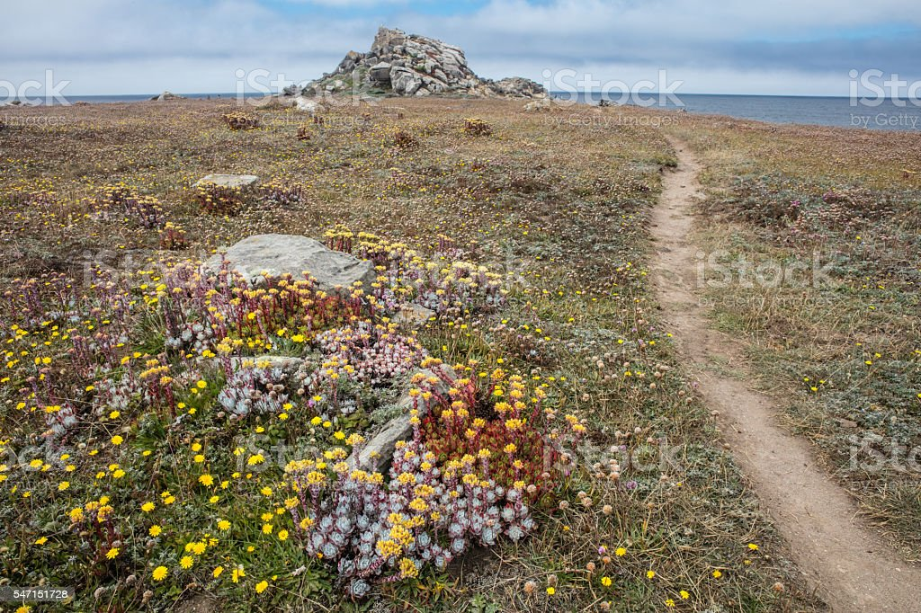 Flowers and Trail on California Coast stock photo