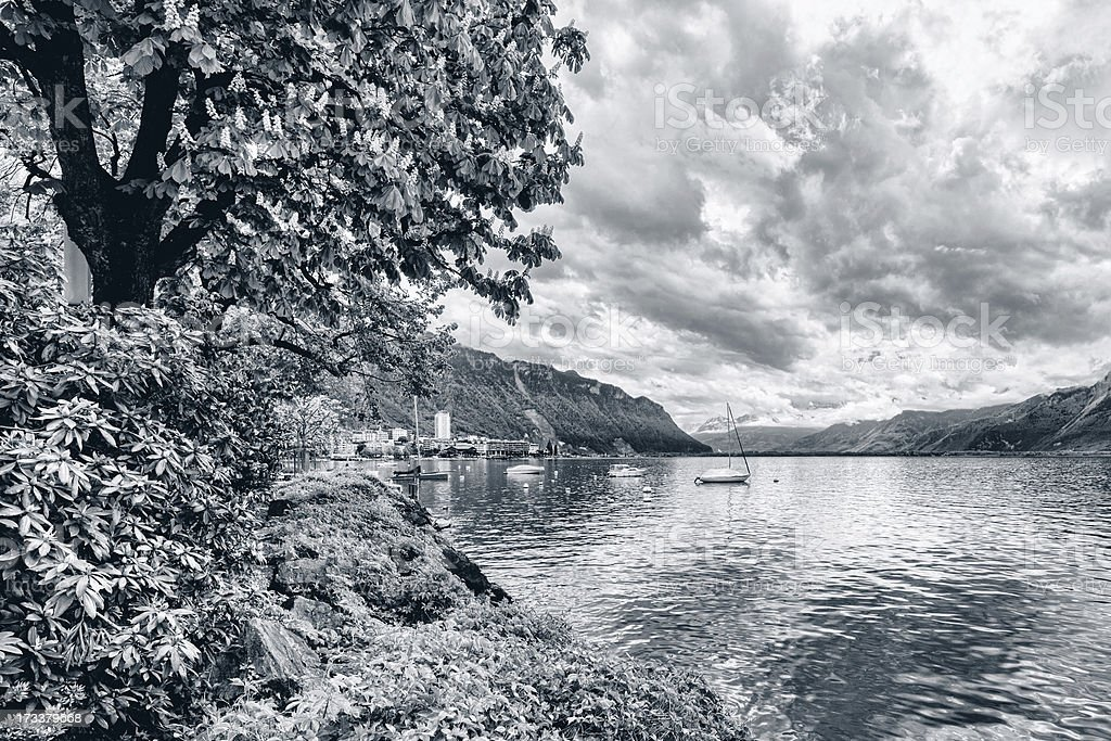 Flowers and trees near lake, Montreux. Switzerland royalty-free stock photo