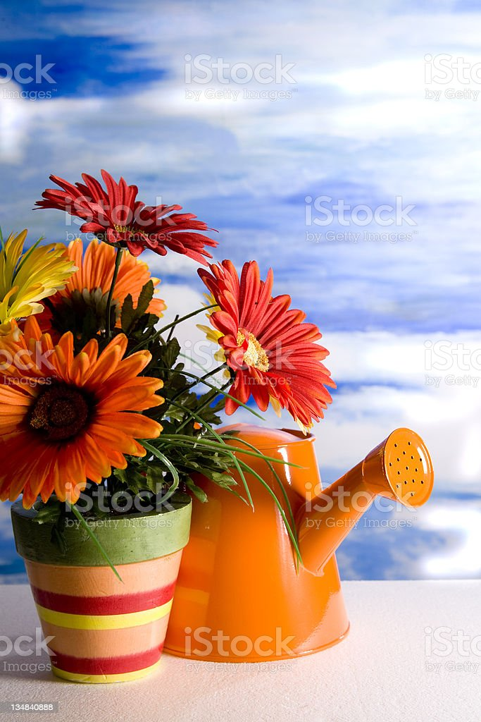 Flowers and watering can - Go Togethers royalty-free stock photo