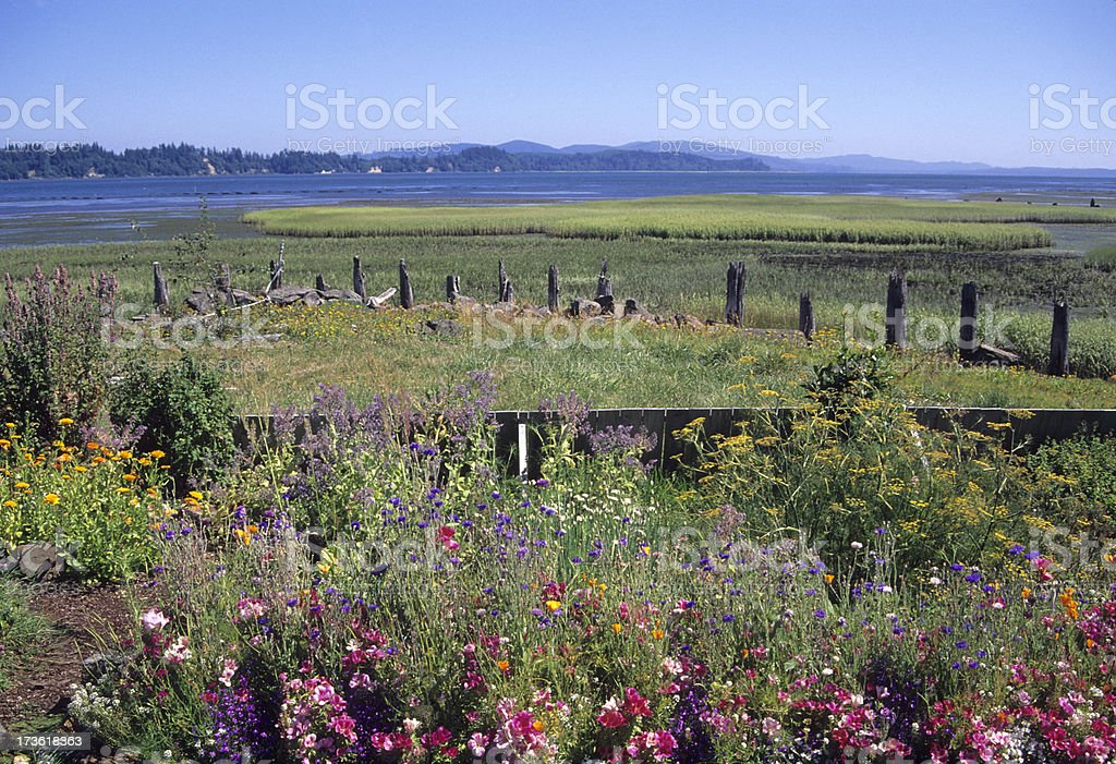 Flowers and Willapa Bay in Washington state royalty-free stock photo