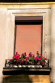 Flowers and window with shutter at home