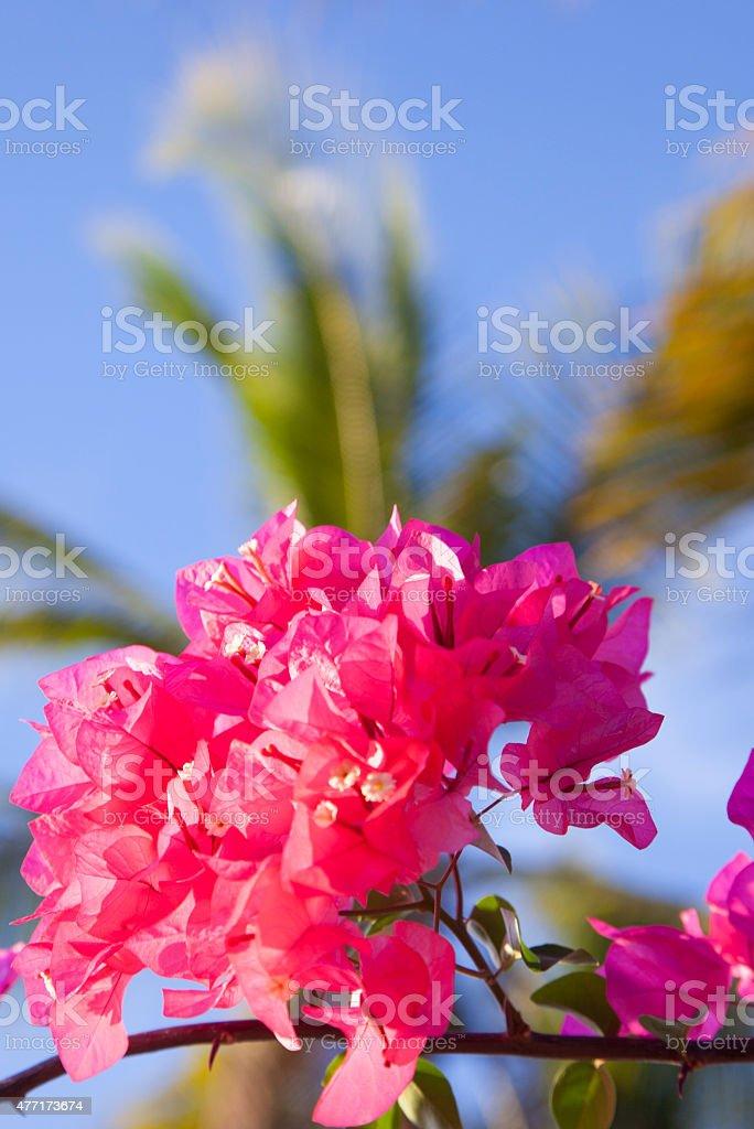 Fleurs sont rire photo libre de droits