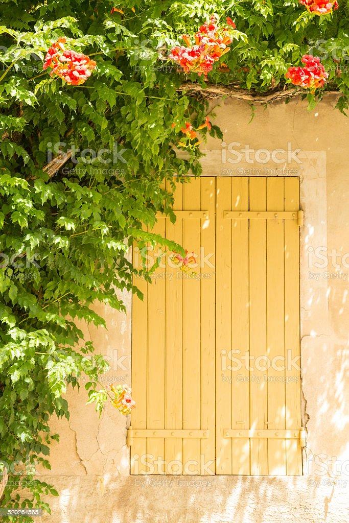Flowers around window shutter stock photo