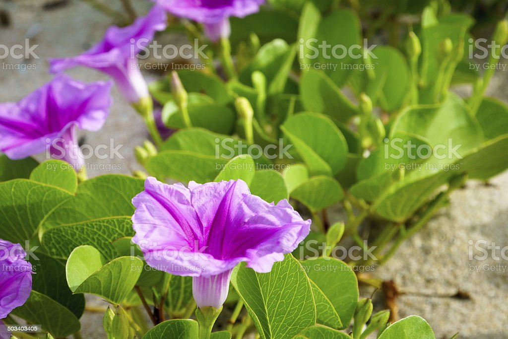 Flowers at Beach stock photo
