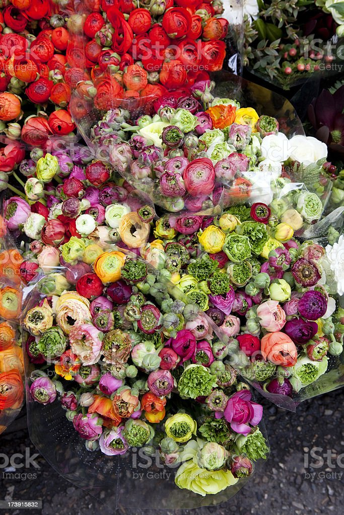 Flowers at Market in Amsterdam royalty-free stock photo