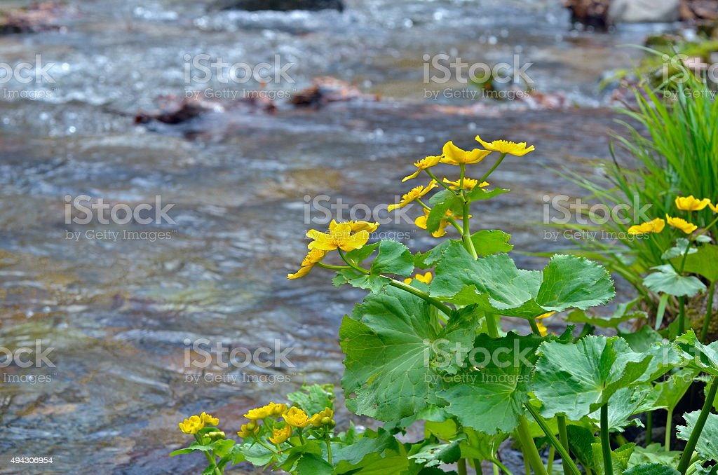 Flowers at river stock photo