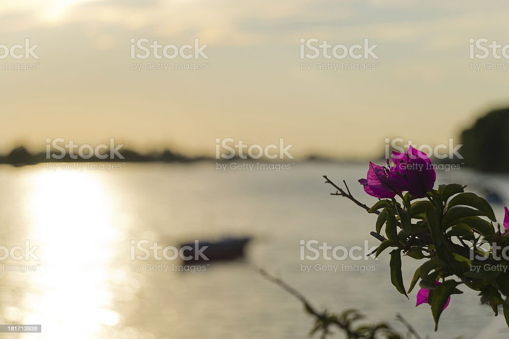 Flores al atardecer royalty-free stock photo