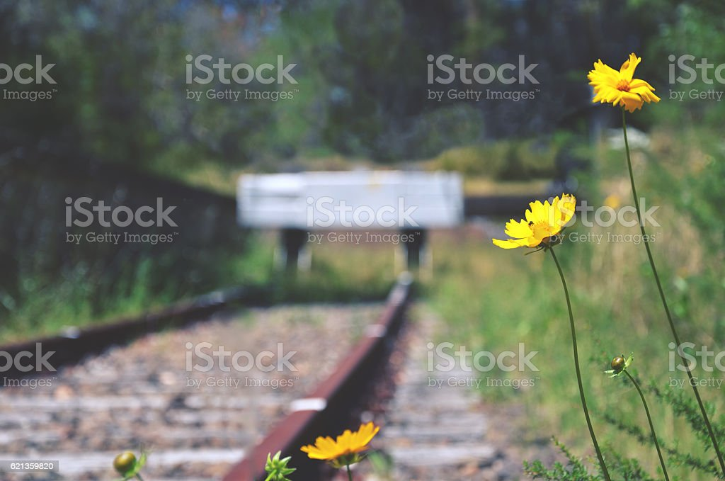 Flowers at the end of the line stock photo