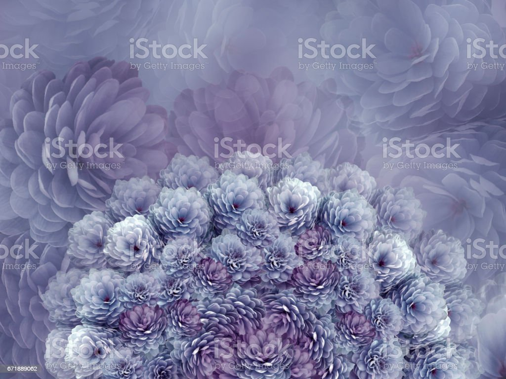flowers  background .Gray flowers chrysanthemum. Floral collage.  Flower composition. Nature. stock photo
