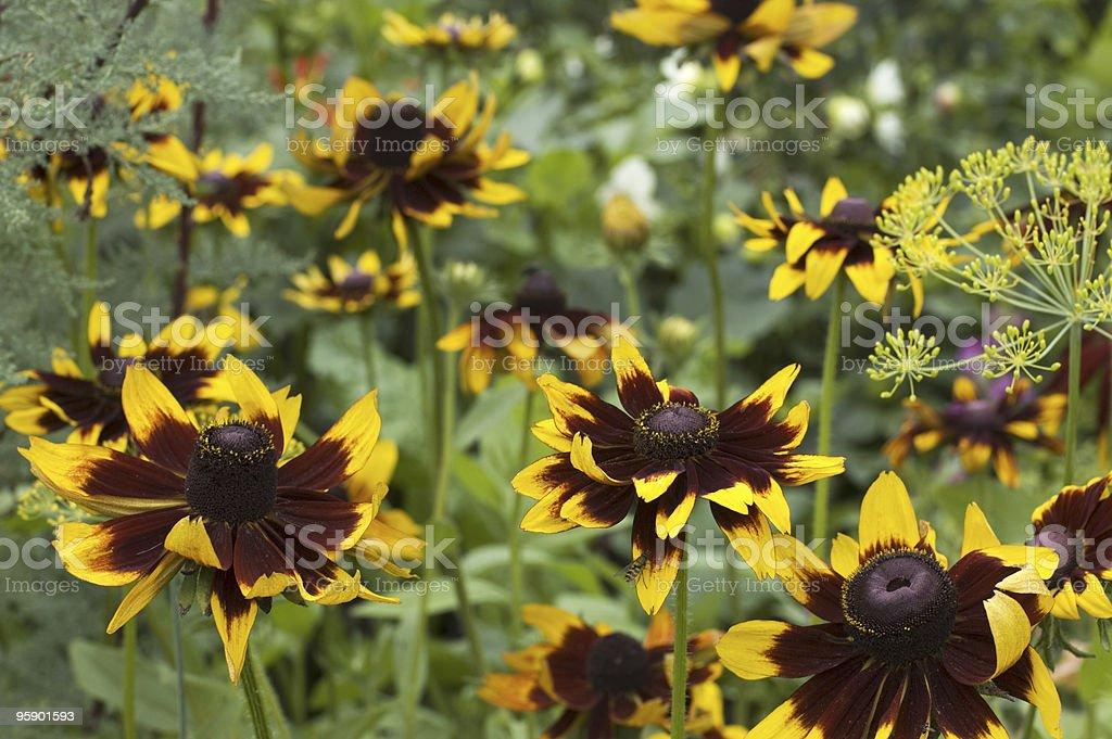 Fleurs d'arrière-plan photo libre de droits