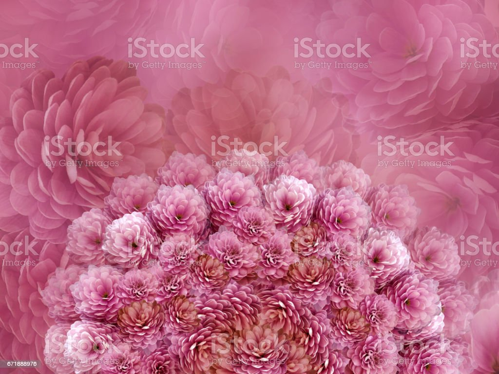 flowers  background .Red flowers chrysanthemum. Floral collage.  Flower composition. Nature. stock photo