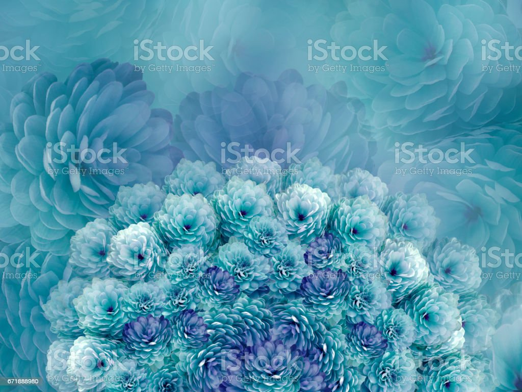 flowers  background .Turquoise flowers chrysanthemum. Floral collage.  Flower composition. Nature. stock photo