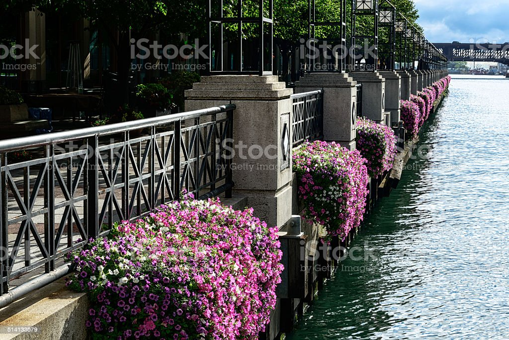 Flowers besides the Chicago River stock photo