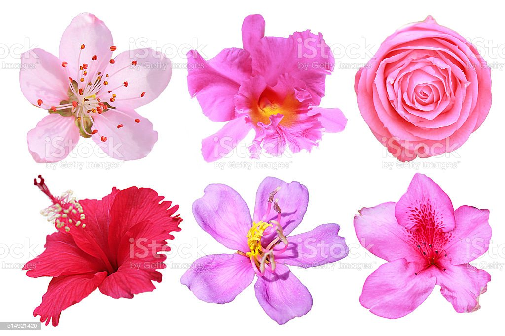 Flowers big set isolated stock photo