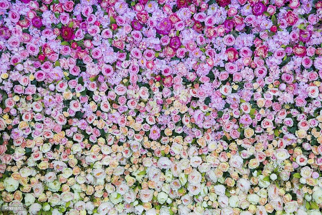 Flowers bloom stock photo