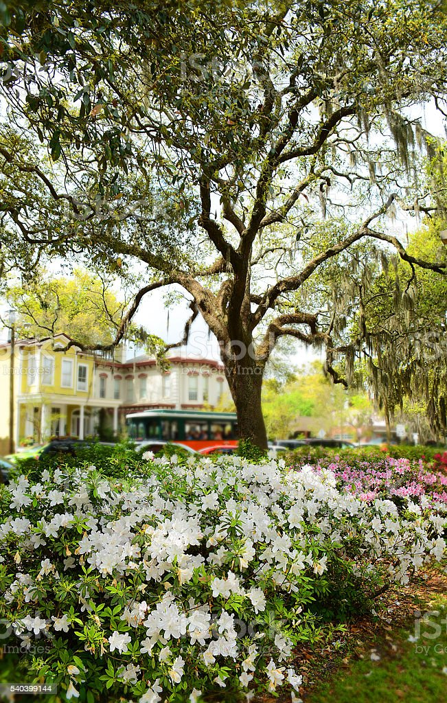 Flowers blooming in historic town Savannah park. stock photo