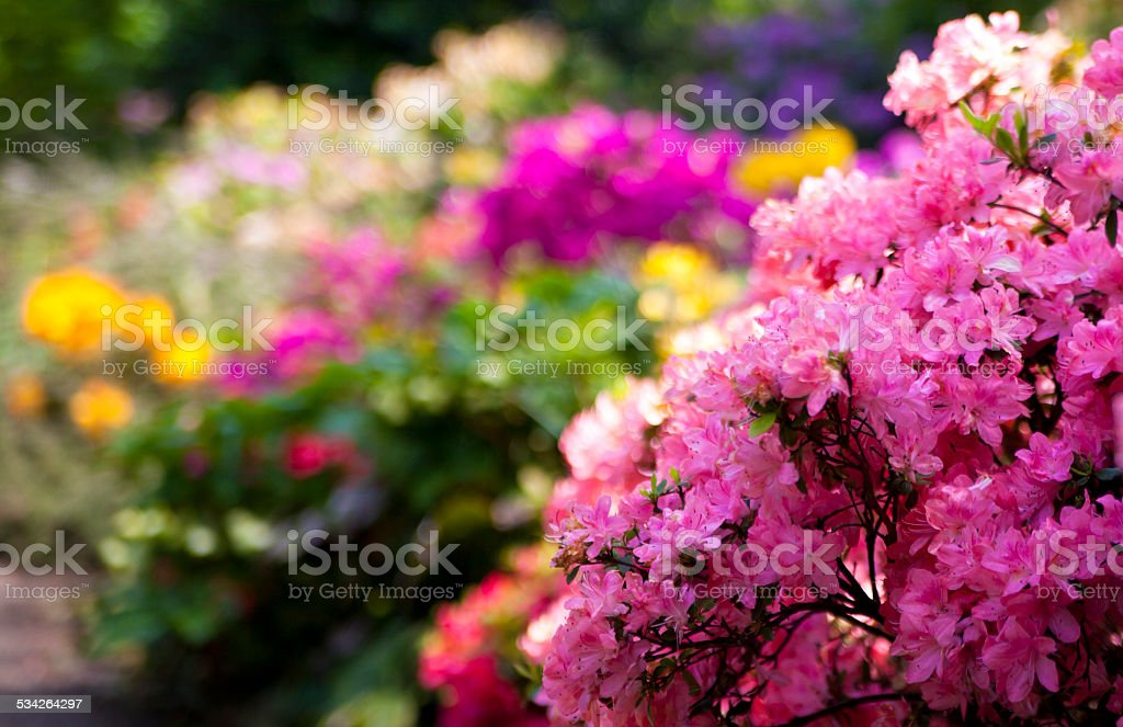 Flowers blossom in Greenwich park, London stock photo