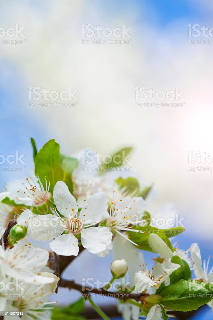 Flowers blossomed stock photo