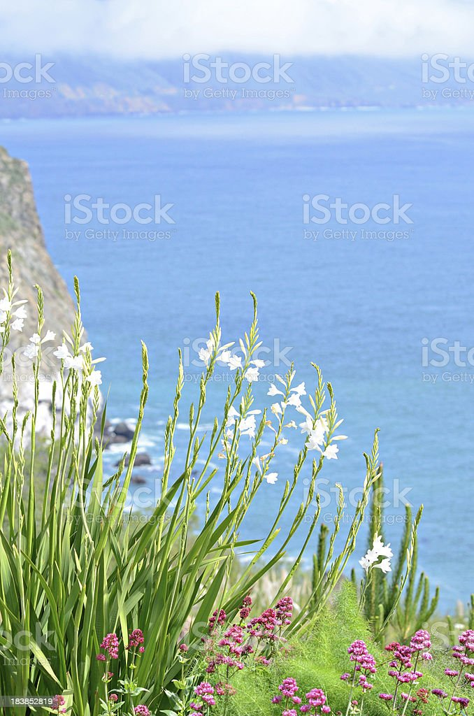Flowers by the Sea stock photo