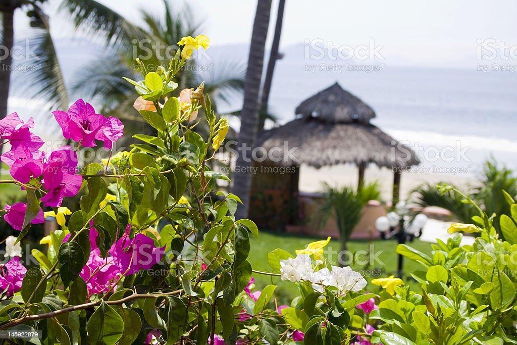 Flowers cabana stock photo