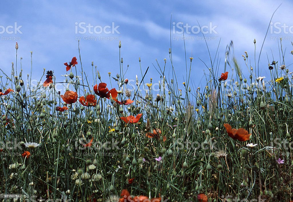 Flowers carpet royalty-free stock photo