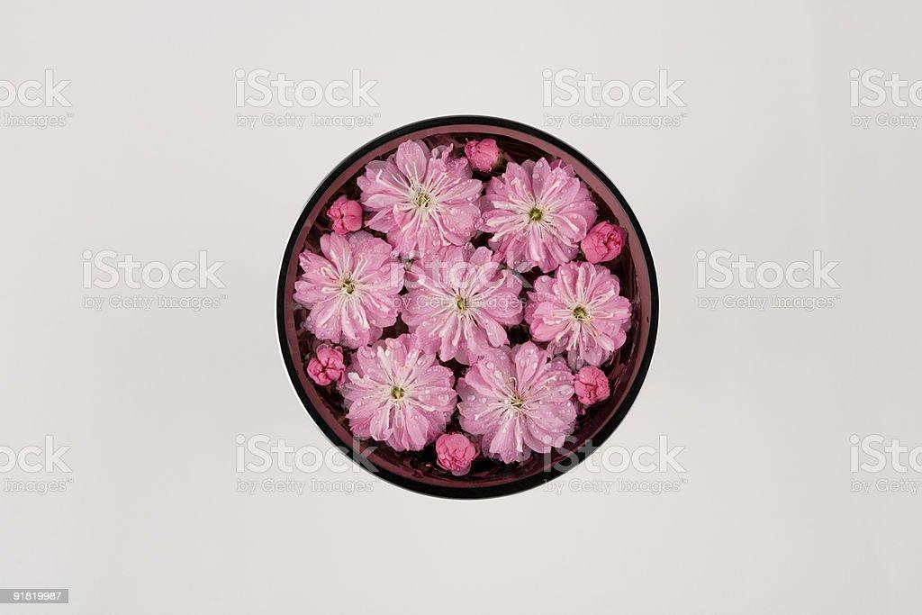flowers cherry royalty-free stock photo