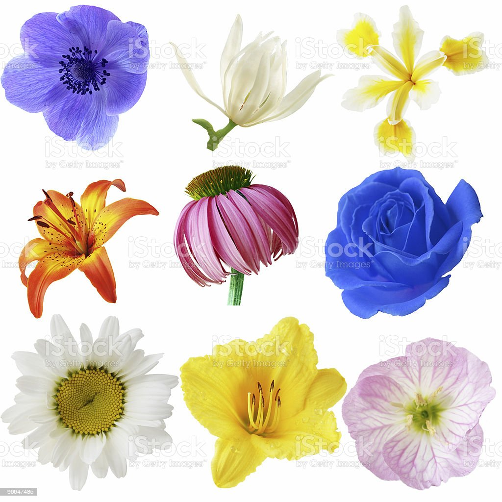 Flowers Collection royalty-free stock photo