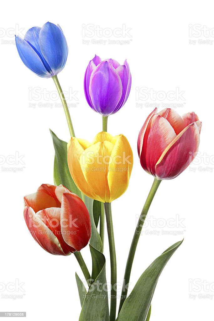 Flowers color design stock photo