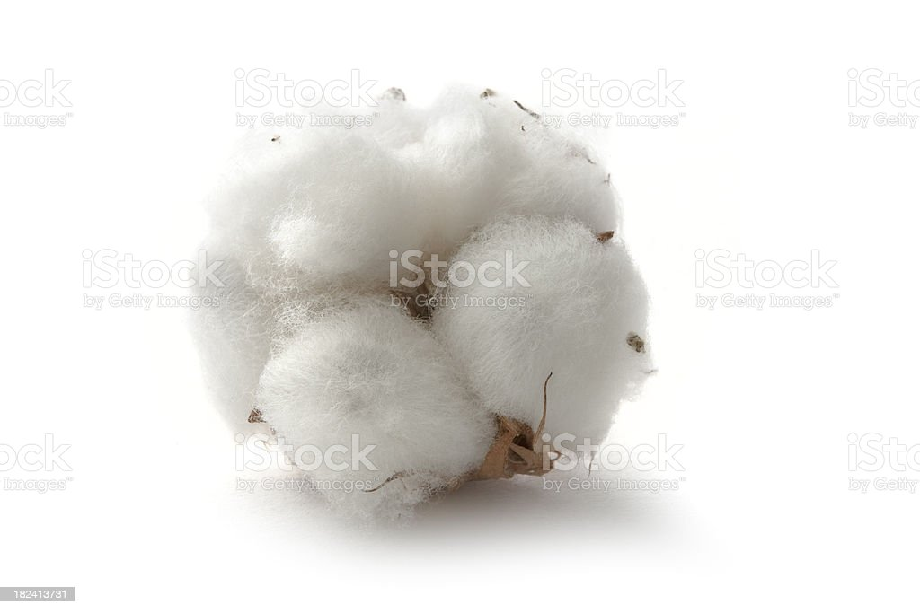 Flowers: Cotton stock photo
