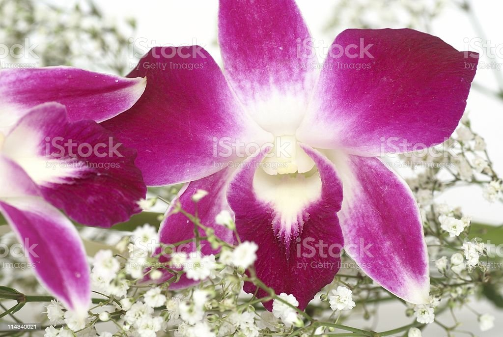 Flowers detail royalty-free stock photo