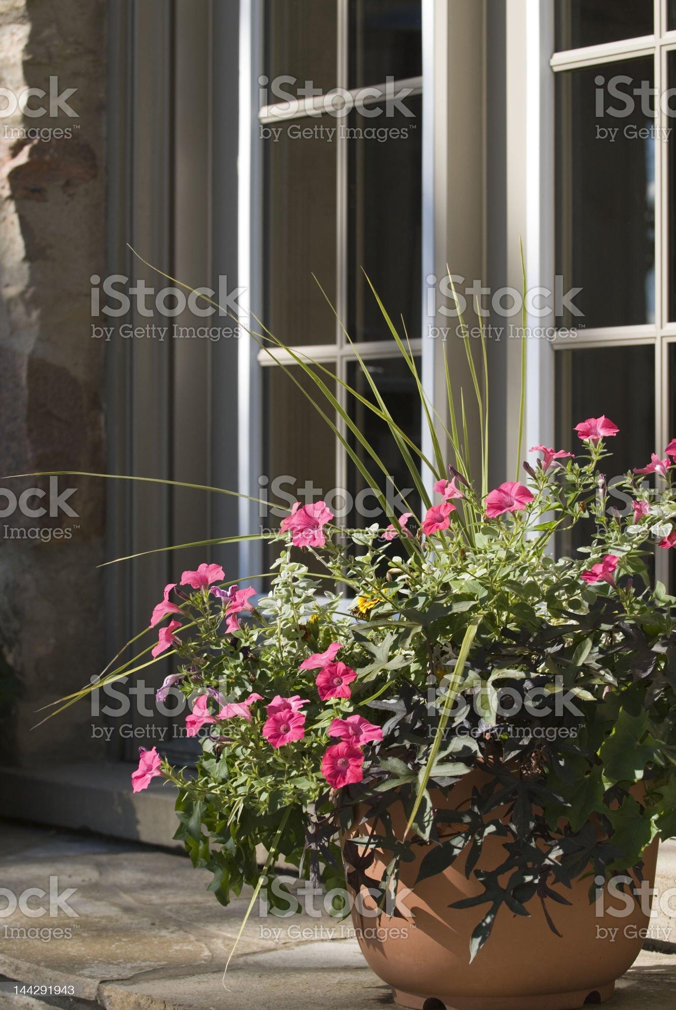 Flowers & Doorway royalty-free stock photo