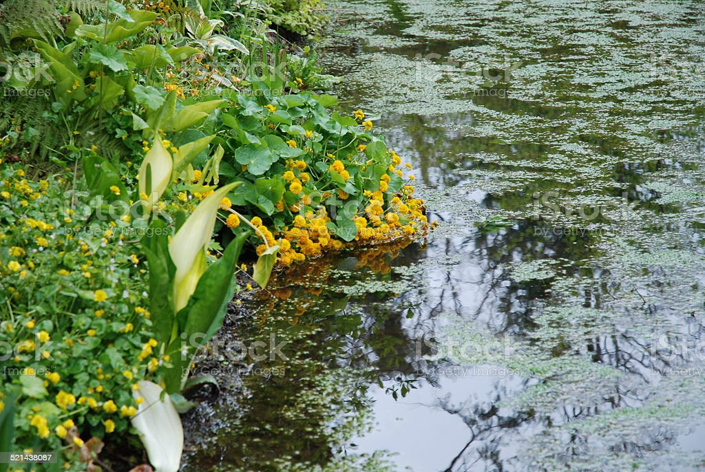 Flowers Draping Over Pond royalty-free stock photo